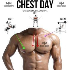 "Chest day ➖ Main chest muscle Pec major 2 ""heads"", upper (clavicular head) and lower (sternal head). The upper head's fibres run downwards ⬇️ as they are attached to the clavicle with the mid fibres running horizontally ⬅️ (because they attach to the centre sternum) and the lower fibres running upward ⬆️. All fibres ultimately insert to the upper arm and thus, pec mjr.'s main movement is bringing the upper arm over and across the body. This is important as it then dictates the exerc..."