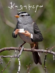 Funny Animal Pictures, Funny Images, Funny Animals, Cute Animals, Frosch Illustration, Tea Illustration, Photoshopped Animals, Animal Mashups, Funny Birds
