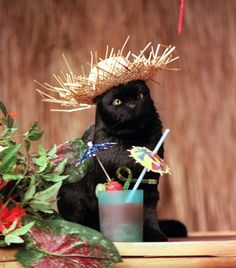 The one and only Salem Saberhagen