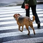 All About Diabetic Assistance Dogs