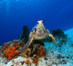 Cozumel offers world class scuba divings. Chankanaab park offers snorkeling for the non divers, so everyone can have fun.