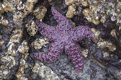 A hidden treasure on the beach!