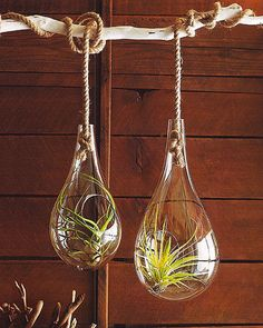 Amazing Hanging Air Plants Decor Ideas 42