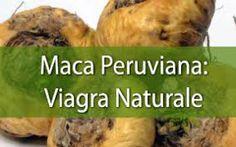 DXN: La Maca a Grandissime proprietà e agisse sulla produzione di sperma. http://www.pierangelopetri.it/la-macao-il-viagra-peruviano/