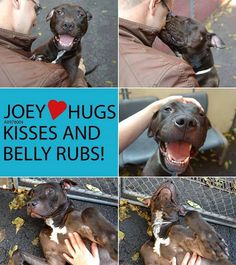Joey has it all, except for the most important thing - a home of his very own and a family to give all his love to! Louie's Legacy Animal Rescue would love to save Joey for a foster or and adopter. Joey's original thread: www.facebook.com/photo.php?fbid=688021701210712&set=a.617938651552351.1073741868.152876678058553&type=1&theater&notif_t=comment_mention ~Brian