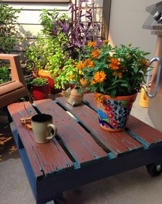 Mexican Sunflowers on outdoor coffee table I made from old pallet.