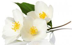 Uykusuzluğa İyi Gelen Çiçekler | Bitkilog Planting Flowers, Plants, Plant, Planets