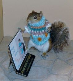 funny little squirrels on pinterest squirrels funny