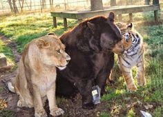animales increibles   .