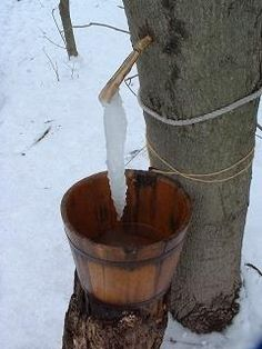 Filtering, freezing, and more great articles. Everything you need to become a sugarmaker right in your own backyard! Maple Syrup Tree, Tapping Maple Trees, Snow Now, Sugar Alternatives, Natural Sugar, Gardening For Beginners, Inventions, Frozen, Backyard