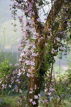 Clematis Montana er en smuk begynder-klematis - Lilly is Love Beautiful Gardens, Beautiful Flowers, Raindrops And Roses, Interior Garden, Garden Photos, My Secret Garden, Plantation, Dream Garden, Belle Photo
