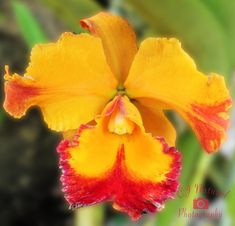 #Orchid #WallArt #FloralWallArt #Tropical #YellowOrchid #TropicalDecor Tropical Decor, Tropical Flowers, Mother Gifts, Mothers, Handmade Home Decor, Handmade Gifts, Yellow Orchid, Shadow Box Frames, Floral Wall Art