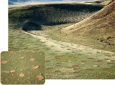 Fairy Circles of Africa
