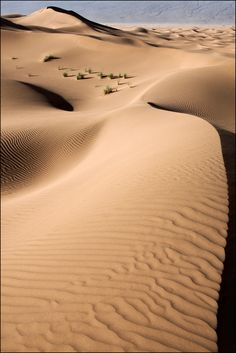 Maroc - Dunes et oasis de l'oued Drâa Oasis, Rest Of The World, Cairo, Marrakech, Beautiful World, Images, Landscape, Abstract, Beach