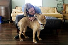 Stuck at Home Americans Turn to Foster Pets for Companionship - Shelters across the United States are reporting upticks in foster applications as people seek out a friend to ride out the coronavirus crisis with. One America News, Foster Dog, Animal Society, Pet Day, Sleeping Through The Night, Someone New, Animal Projects, Foster Parenting, Feeling Lonely