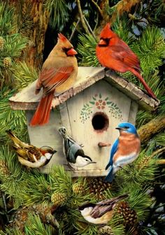 Spring Pine Tree Gathering birdhouse Cardinals, Bluebird, Chickadee SM Flag | eBay