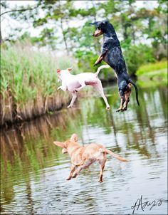"Launch! These dogs have a handle on this summer, gives new meaning to ""the dog days of summer""! # Pin++ for Pinterest #"