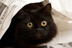 10 Beautiful & Mysterious Black Cats
