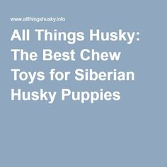 All Things Husky: The Best Chew Toys for Siberian Husky Puppies