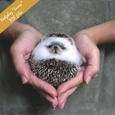 """PDF Hedgehog  """"lump"""" Needle Felted Animal. i'm learning how to needle felt asap. this is adorable."""