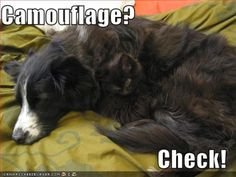 funny pictures cat dog camouflage - Funny cats and dogs pics!
