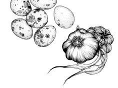 Adriana Picker Organum Illustration for Peter Gilmore