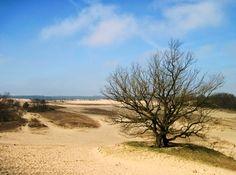 Drunense Duinen, Noord-Brabant