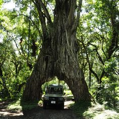 Arusha and Arusha National Park | Tanzania | Expert Africa