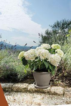 #euganeavasi #vasi #terracotta #vasiditerracotta #pots #garden #gardening #naturalgardening #flowers #plants #giardinaggio #piante #fiori #balcone #giardino #terrazza #verde #green #madeinitaly #italy #gardendesign #greendesign #outdoordesign #indoordesign