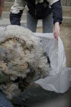 Wash wool or other fibers for spinning. This is the best tutorial I've found in searching