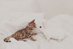 adorable kitten and white bunny on the bed