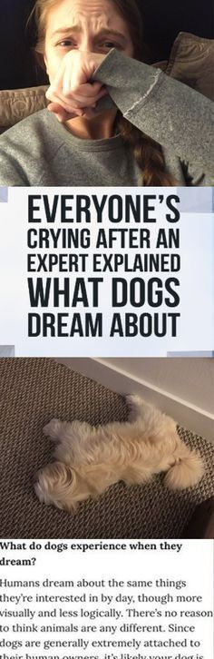 What are dogs and cats dreaming about when they're barking or purring? What's their favorite thing to do? People Magazine recently talked to Dr. Deirdre Barrett, who's a teacher and Clinical and Evolutionary Psychologist at Harvard Medical School, to learn about what dogs dream about.