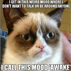 14 hilarious grumpy cat memes that will make you laugh! Grumpy Cat Quotes, Gato Grumpy, Funny Grumpy Cat Memes, Funny Cats, Funny Animals, Funny Memes, Cute Animals, Grumpy Kitty, Funny Quotes