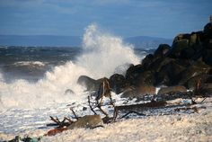 Seafoam and Spray, Boxing Day 2014, Hall's Harbour, Nova Scotia