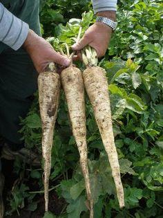 Grow Bags, Asparagus, Flora, Chata, Gardens, Garden, Garden Types, Tuin, House Gardens