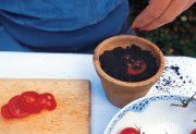 Easy peasy - turn a slice of your favourite tomato into a plant!