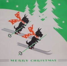 Scotties skiing at Christmas.