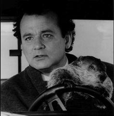 Groundhog teaching Bill Murray to Drive.