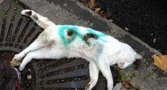 #Roma: #gatto torturato, ucciso e abbandonato in strada #animali