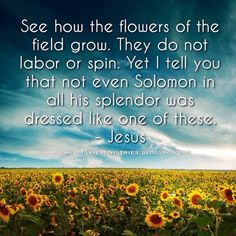 And why do you worry about clothes? See how the flowers of the field grow. They do not labor or spin. Yet I tell you that not even Solomon in all his splendor was dressed like one of these. If that is how God clothes the grass of the field, which is here today and tomorrow is thrown into the fire, will he not much more clothe you—you of little faith? So do not worry, saying, 'What shall we eat?.. (See Matt. 6:28-14) or  https://instagram.com/p/6Fv7EKv4TY/ for the rest of this Scripture.