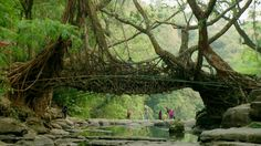 The indigenous Khasi people created the bridges to prevent villages being cut off during monsoons.