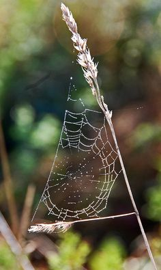 Spiderwebs Are Cool Spider Webs Art Silk Charlottes Web Tangled