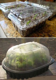 Learn how simple starting a garden is by reading how to start seeds in container. - Learn how simple starting a garden is by reading how to start seeds in containers you have around t - Indoor Vegetable Gardening, Container Gardening, Organic Gardening, Gardening Tips, Gardening Vegetables, Gardening Supplies, Container Vegetables, Gardening Courses, Veggie Gardens