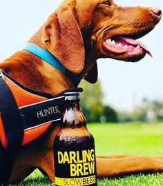 """Every time I look at this picture I think of the quote - """"In dog beers. African Crafts, Summer Days, Craft Beer, Photo Credit, Brewing, That Look, Quote, Dogs, Pictures"""