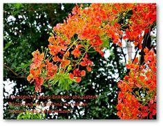 My Haiku # 022 Beauty…. Innocent flowery branch, consistent Blooming all seasons no reason Doesn't seek admiration!!