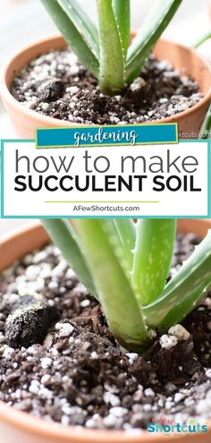 If you love succulents you need to learn how to make succulent soil ASAP! This simple mix will keep your succulent garden flourishing!
