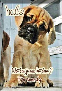 Top 5 Most Beautiful Dog Breeds - b u l l y - Puppies Cute Puppies, Cute Dogs, Dogs And Puppies, Puggle Puppies, Doggies, Baby Animals, Cute Animals, Pretty Animals, Most Beautiful Dog Breeds