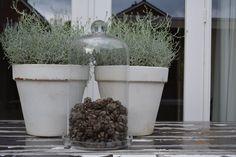 Beautiful bell jar ! www.zuzzen.nl