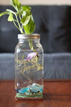 36 Excellent Diy Fish Tank Design Ideas With Mason Jar To Try Asap - If you're serious about your betta fish care then it's important to set up a great betta aquarium. While your fish can live in a small bowl or jar it . Diy Aquarium, Aquarium Terrarium, Terrarium Ideas, Mason Jar Terrarium, Mason Jars, Mason Jar Crafts, Hyacinth Flowers, Betta Fish Tank, Decoration Plante