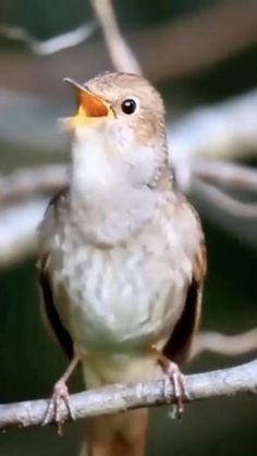 Good Morning Flowers Gif, Good Morning Nature, Good Morning Beautiful Images, Most Beautiful Birds, Good Morning Gif, Good Morning Quotes, Animals Beautiful, Morning Morning, Beautiful Pictures